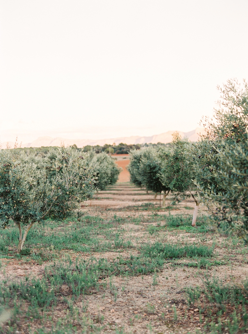 olive groves Mallorca , summer wedding  Mallorca
